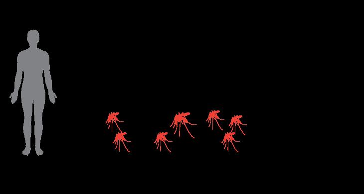 diagram of mosquito experiment