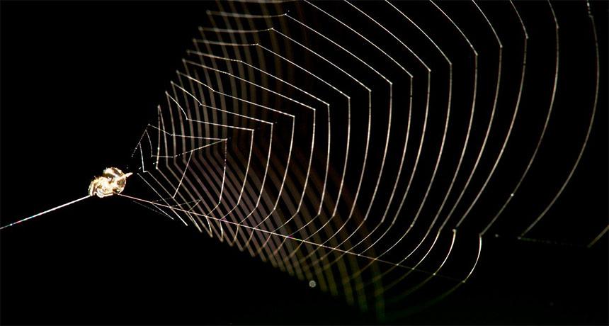 Slingshot Spider 030519_ec_slingshot-spider_feat
