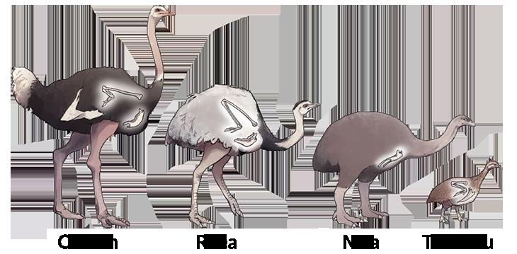040319_TS_flightless-bird_inline_2_730.png