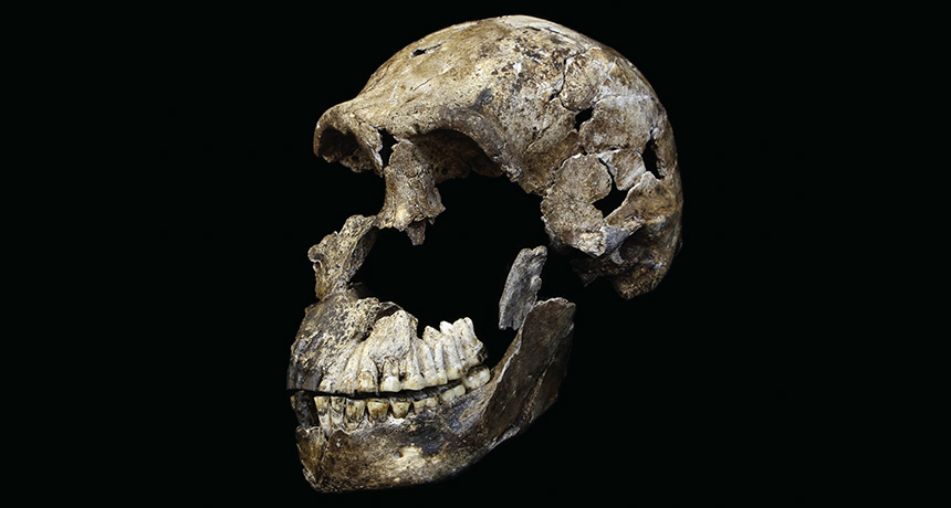 This hominid may have shared Earth with humans | Science News for Students
