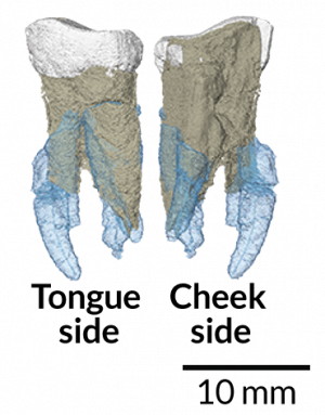 052217_BB_early-hominid_inline_free.png