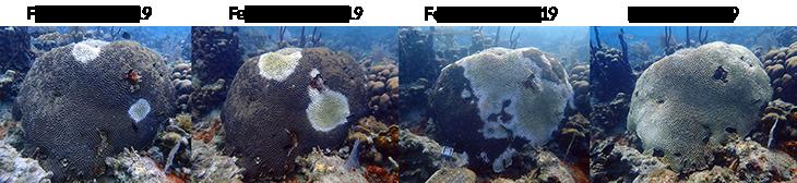 062819_CM_coral-disease_inline_1.png