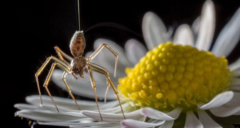 070318_LH_ballooning-spiders_feat.jpg