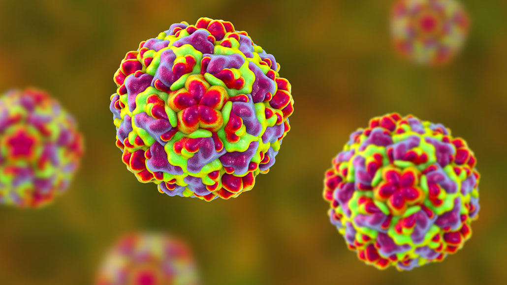 Could Disabling One Protein Cure The Common Cold Science News For Students
