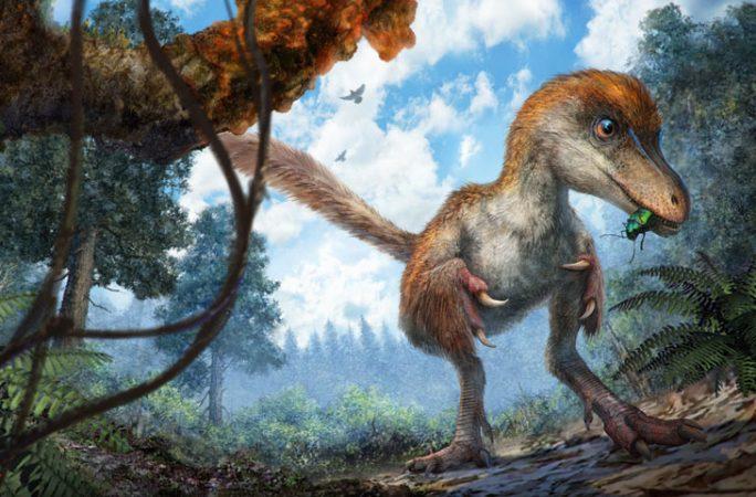 coelurosaur dino