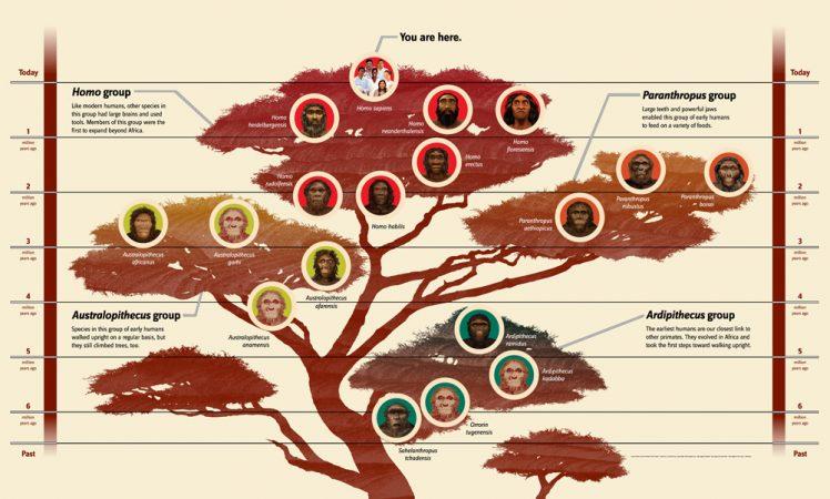 2 3 1_Family Tree 50_1000.jpg