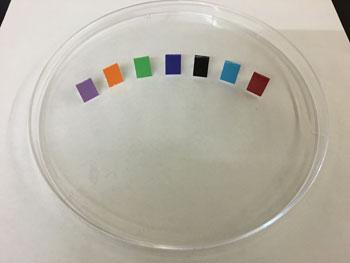 bed bug color test