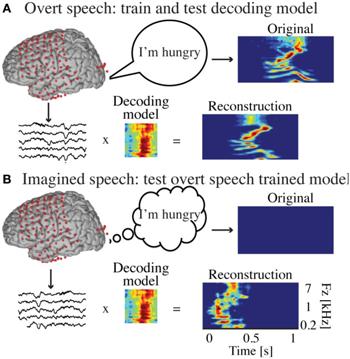 350-inline-3-brain-decoding-fneng-07-00014-g0002.png