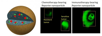 350-inline-4-nanomedicine.png