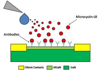 350_Inline2_algae_biosensor.png