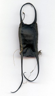 350_Little_Skate_eggcase.png