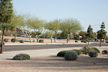 350_Xeriscaping-.png