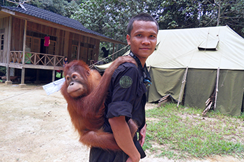 350_Young_orangutan_forest_school.png