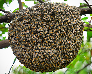350_bee_swarm.png