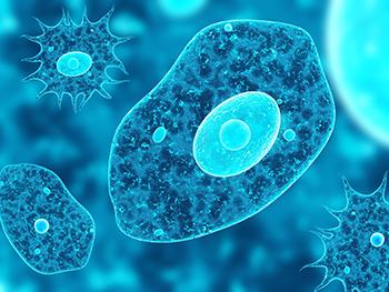 350_eukaryotes.png