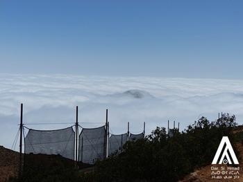 350_fog_nets.png