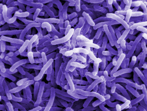 350_inline_Choleara_Bacterium_ND.png