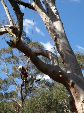 350_inline_Davis---Climbing-Tree.png