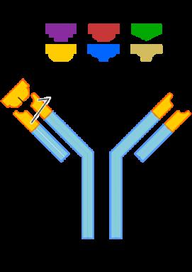 350_inline_antibody.png