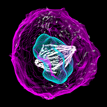 350_inline_dividing_stem_cell.png