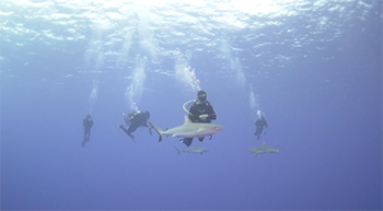 350_inline_diving_team_sharks.png