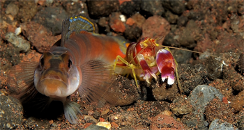 350_inline_gobi_and_shrimp_CJ_aglow.png