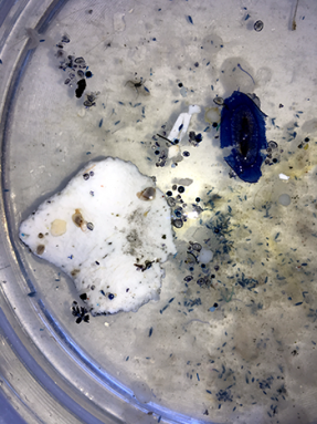 350_inline_microplastics_garbage_patch.png