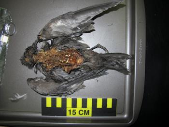 350_inline_seabirds.png