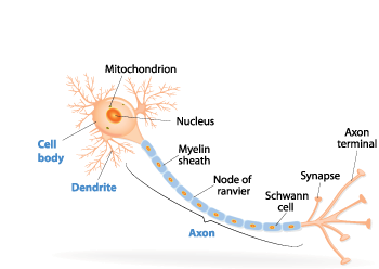350_neuron_schematic.png