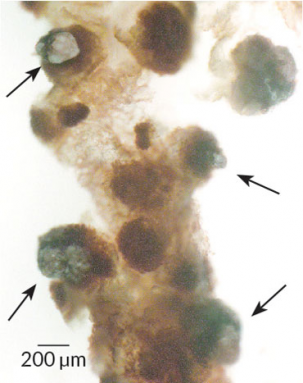370_kissing_bug_gut_enzymes.png
