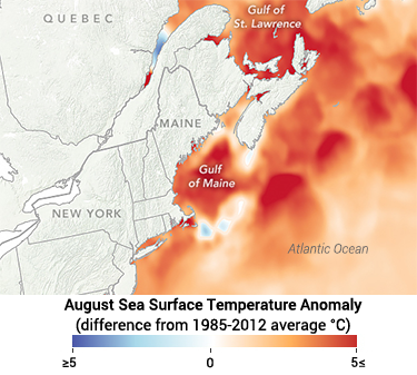 375_CCC8_gulf_of_maine_warm_water_record_2018.png
