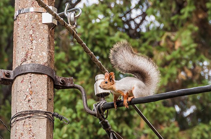 a squirrel sitting on a powerline