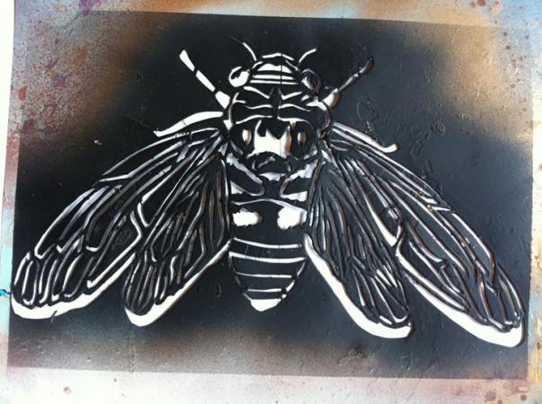 730-final-inline-cicada-stencil.png