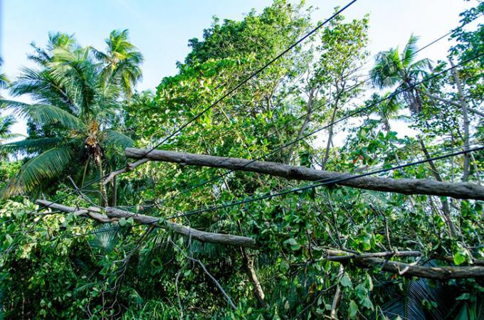730_Irma_powerlines_Puerto_Rico.png