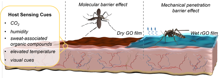 730_LEM-mosquitoes-graphene-2_SS.png