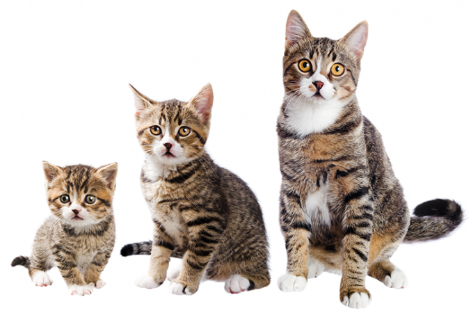 730_SS_mitosis_cats.png