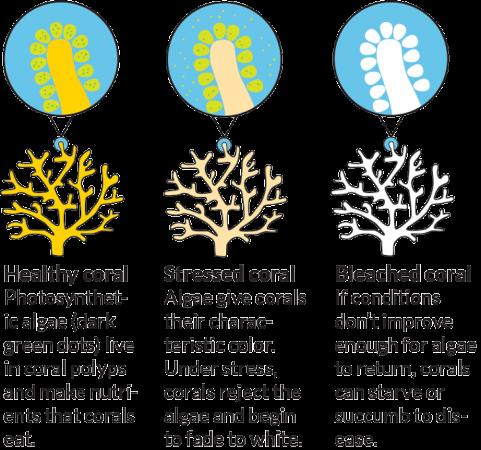 730_inline1_coral_diagram.png