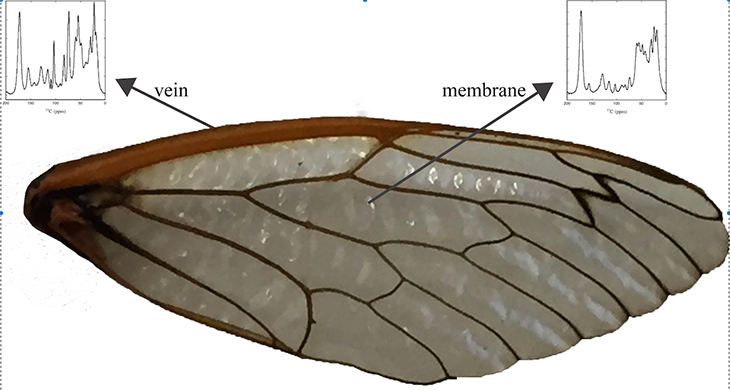 730_inline_Cicada_wing_NMR.png