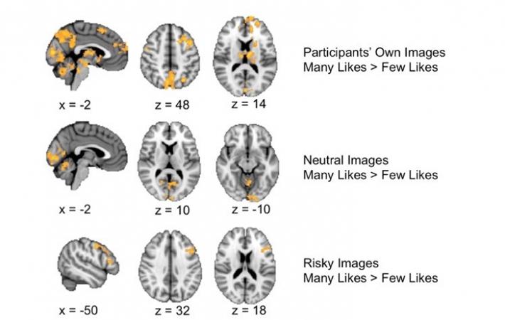 730_social_brain_responses.png