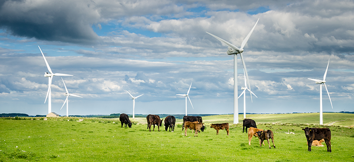 730_wind_turbines_cows.png