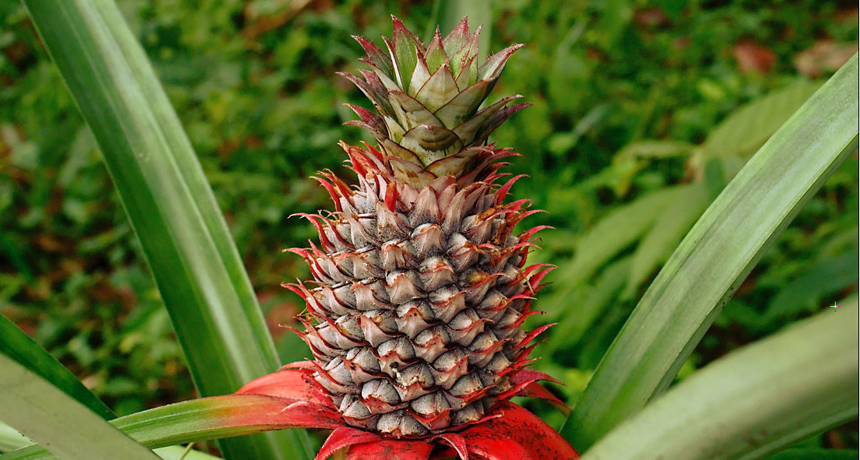Scientists Say Bromeliad Science News For Students