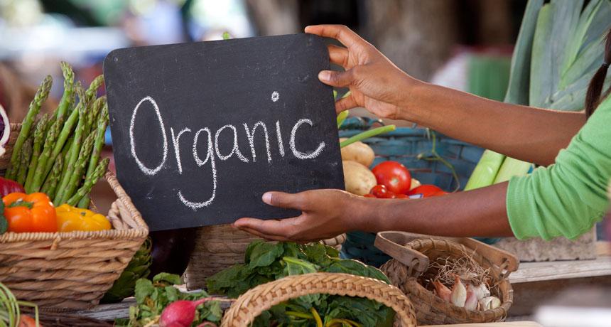 Organic food starts to prove its worth