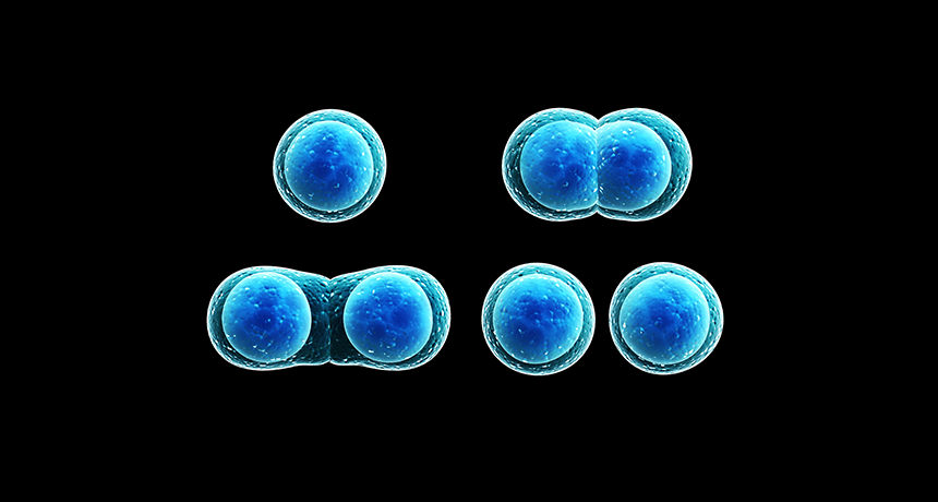 Image result for cell mitosis