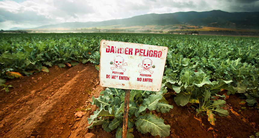U.S. farmers still use many pesticides that are banned elsewhere | Science  News for Students
