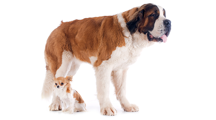 Dna Testing Looks Into Dog Breeds And
