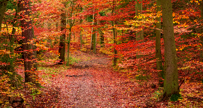 A Change In Leaf Color Science News For Students
