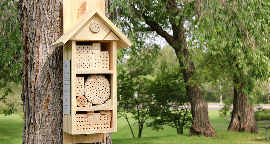 Bee hotels are open for business | Science News for Students