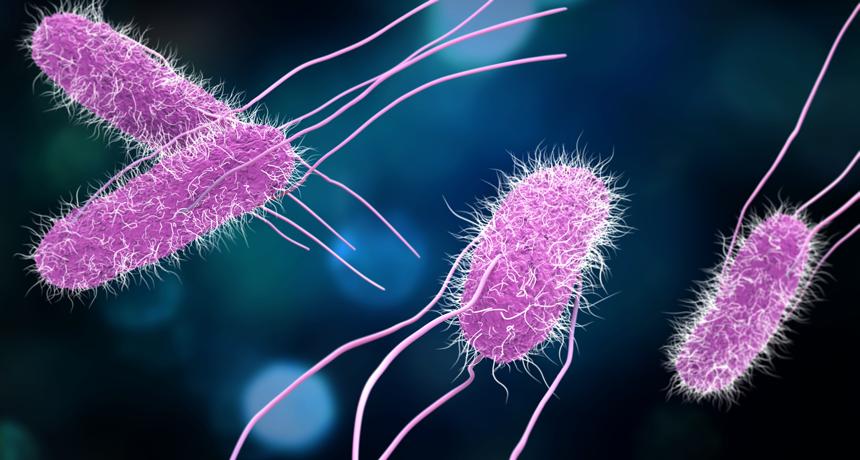 Single celled prokaryotes all organisms are 2: The