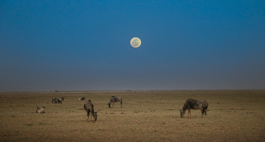 The moon has power over animals | Science News for Students