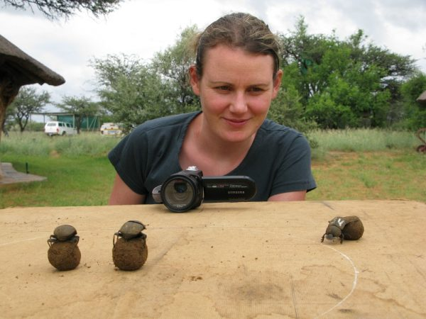 Biologist Emily Baird finds dung beetles so fascinating that she doesn't mind collecting manure for them. Credit: Maria Dacke